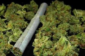 calidad-de-la-marihuana