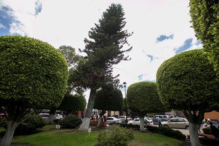 Servicios_Públicos_Municipales_Poda_Arboles_Jul_06_JVQ_12