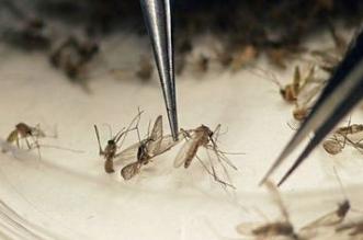 cientxficos_almacenan_mosquitos_en_pequexos_espacios_y_son_especies_estxriles_2.jpg_1619830263